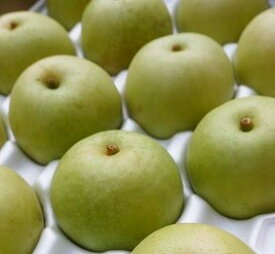 【ふるさと納税】458 二十世紀梨 3キロ(たにがみ農園)鳥取 フルーツ 果物 ジューシー 梨 なし ナシ 送料無料
