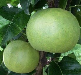 【ふるさと納税】276 なつひめ 鳥取 フルーツ 果物 ジューシー 梨 なし ナシ 送料無料 期間限定