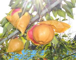 【ふるさと納税】285 あたご梨(鳥取いなば農業協同組合) フルーツ 果物 梨 なし ナシ 送料無料