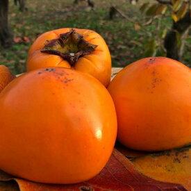 【ふるさと納税】樹齢100年の古木から採れる花御所柿