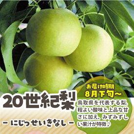 【ふるさと納税】【先行予約】二十世紀梨