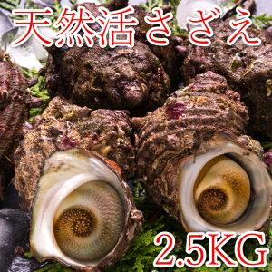 天然サザエ2.5Kg(殻付き)