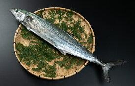 【ふるさと納税】OM-04 獲れたて鮮魚 サワラ約2kg(1匹)
