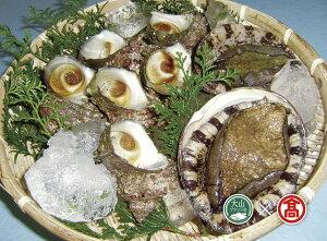 【ふるさと納税】あわび・さざえ海の貝セット(大山ブランド会)