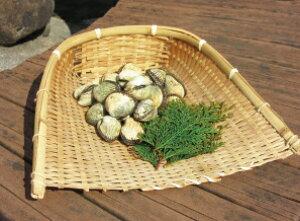 【ふるさと納税】中海産 赤貝(サルボウガイ)1kg 赤貝 濃厚 肉厚 中海 特産品  《21010-20》