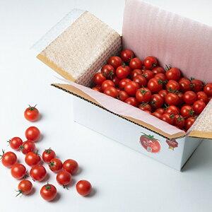 【ふるさと納税】「海辺のトマト」1kgセット トマト フルティカ 海辺 旨味 高糖度 高濃度 リコピン GAVA 松江 《21010-06》