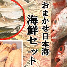 【ふるさと納税】302.おまかせ日本海海鮮セット(生)