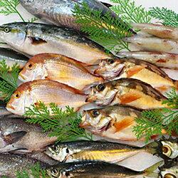 【ふるさと納税】744.季節の鮮魚セット年6回コース