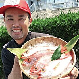 【ふるさと納税】10.「のどぐろ(鮮魚)」