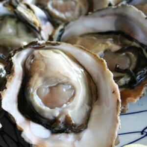【ふるさと納税】822.【先行予約】浜田のきれいな海で育った 完熟岩牡蠣の刺身