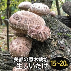 【ふるさと納税】A-534 森の香り豊かな『美都の原木栽培生しいたけ』(700〜800g)