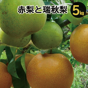 【ふるさと納税】A-274 赤梨と瑞秋梨のセット 5kg