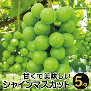 【ふるさと納税】D-524 甘くて美味しい シャインマスカット 5kg(6〜12房)