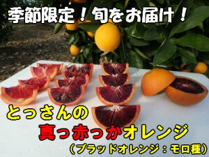 【ふるさと納税】 B172 とっさんの真っ赤っかオレンジ(ブラッドオレンジ:モロ種)(配達指定日不可)