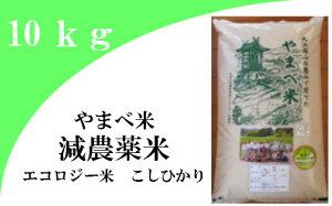 【ふるさと納税】新米 無洗米 米 こしひかり B073-2 【無洗米】減農薬米(こしひかり100%)(令和2年産) 10kg