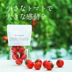 【ふるさと納税】 MINORI 3パックセット 高糖度 フルーツトマト ミノリ トマト アイメック 甘い ※予約受付中