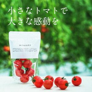 【ふるさと納税】 MINORI 6パックセット フルーツトマト トマト アイメック 甘い
