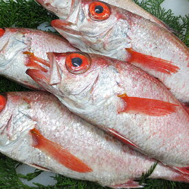 【ふるさと納税】鮮魚セットD 【魚貝類】 お届け:2020年9月上旬〜2021年5月下旬