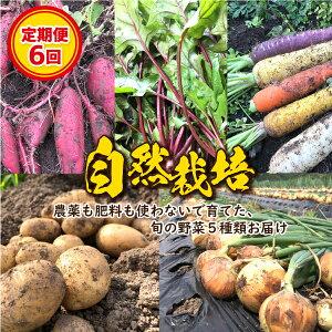 【ふるさと納税】【予約受付! 定期便6回 】『べっぴん野菜』お楽しみセット
