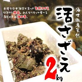 【ふるさと納税】隠岐 海士町 島獲れ 活さざえ 2kg 新鮮 つぼ焼き BBQ おかず サザエ 栄螺(※2021年9月以降発送)