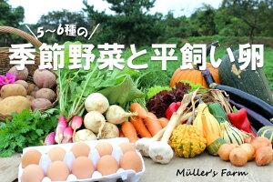 【ふるさと納税】季節の野菜詰め合わせ(5〜6種)と平飼い卵セット!完全無農薬栽培だから安心安全!