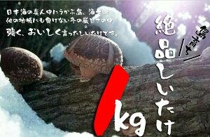 【ふるさと納税】島育ち!海士の絶品椎茸詰め合わせ1kg!