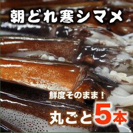 【ふるさと納税】旨味たっぷり!旬の寒シマメ(スルメイカ)丸ごと5本(1kg〜1.25kg)<便利な個包装>