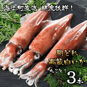 【ふるさと納税】高級 イカ 朝どれ 白いか 丸ごと3本セット 刺身 個包装 小分け 冷凍 送料無料