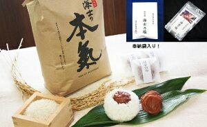 【ふるさと納税】海士の本氣米(10kg)梅むすびセット