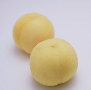 【ふるさと納税】C-18 おかやま冬桃がたり 約1kg