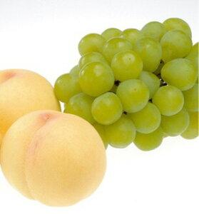 【ふるさと納税】岡山産白桃とマスカット・オブ・アレキサンドリアの詰め合わせ