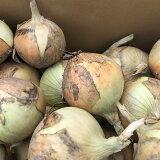 【ふるさと納税】岡山県 笠岡市 瀬戸内の土で育てたミネラル玉ねぎ 30玉(約7.5kg)