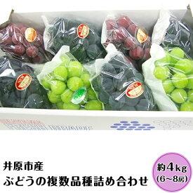 【ふるさと納税】E-01 特産ぶどうバラエティ4k箱