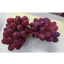【ふるさと納税】0010-B-094 びぜん葡萄(紫苑)