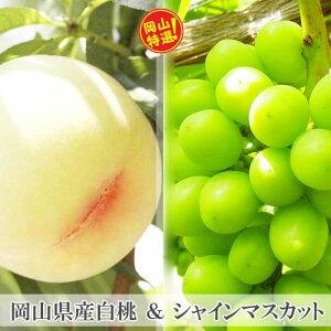 【ふるさと納税】0025-B-026 岡山県産白桃&シャインマスカット約1kgセット