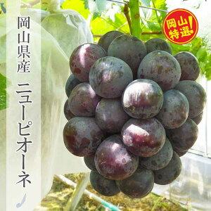 【ふるさと納税】0025-B-028 岡山県産ニューピオーネ約2kgセット