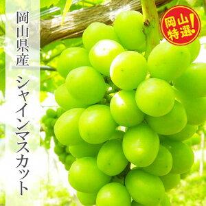 【ふるさと納税】0025-B-027 岡山県産シャインマスカット約2kgセット