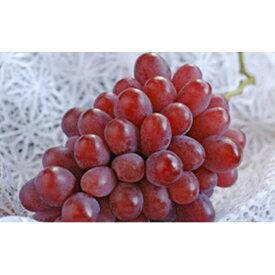 【ふるさと納税】岡山県産 紫苑 約2kg(3〜5房) 【果物・ぶどう・フルーツ・果物類】 お届け:2020年10月中旬〜2020年11月上旬
