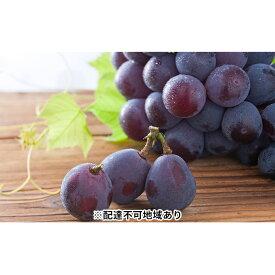 【ふるさと納税】ピオーネ2kg入り 上 ※クレジット限定 【果物・ぶどう・フルーツ】 お届け:2020年8月24日〜2020年9月18日