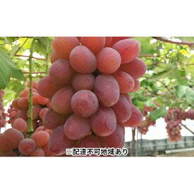 【ふるさと納税】ぶどう(紫苑)2kg ※クレジット限定 【果物類・ぶどう・フルーツ】 お届け:2020年10月1日〜2020年11月20日