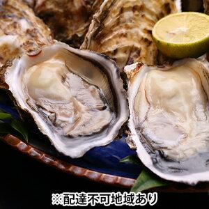 【ふるさと納税】殻付 生牡蠣セット(大) 【魚介類・カキ・牡蠣】 お届け:2019年12月上旬〜2020年3月下旬