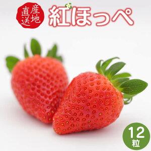 【ふるさと納税】神の苺12粒 紅ほっぺ 送料無料 広島県産 ギフト プレゼント