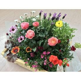 【ふるさと納税】生産農場直送!季節の花苗セット