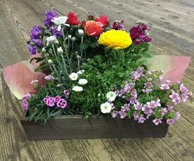 【ふるさと納税】B-125 生産農場直送!季節の花苗セット