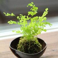【ふるさと納税】B-15 プリザーブドフラワー ぷり盆栽