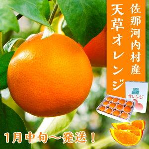 【ふるさと納税】天草オレンジ(10玉〜15玉入り)※1月中旬頃から順次発送