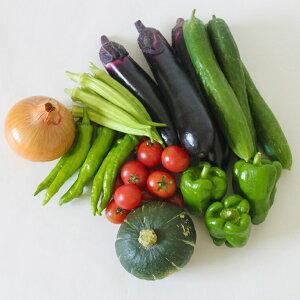 【ふるさと納税】010-031 若葉農園の無農薬自然栽培野菜セット