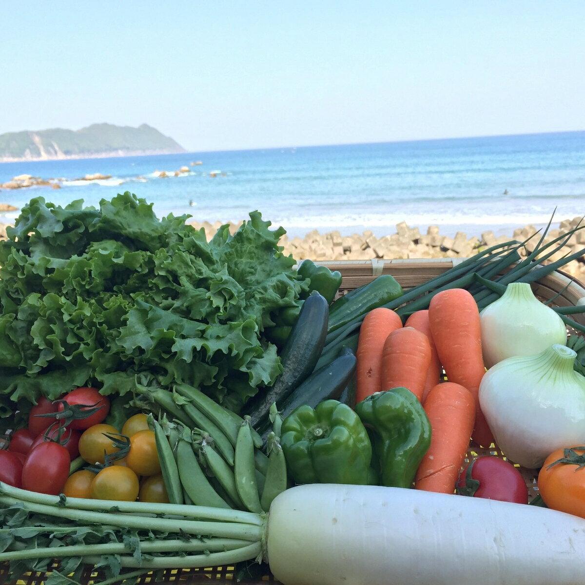 【ふるさと納税】SGN14【定期便年2回】阿波の国海陽町 旬のお野菜詰め合わせセット