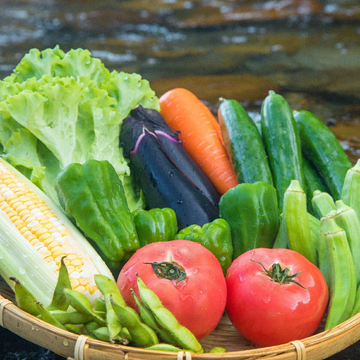 【ふるさと納税】SGN15【定期便年4回】阿波の国海陽町 旬のお野菜詰め合わせセット