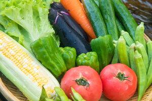【ふるさと納税】SGN28 阿波の国海陽町 旬のお野菜詰め合わせセット2-3名様向け